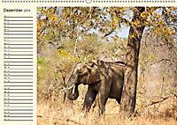 Elefanten - Graue Riesen (Wandkalender 2019 DIN A2 quer) - Produktdetailbild 12