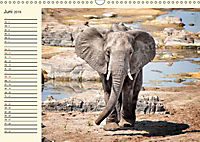 Elefanten - Graue Riesen (Wandkalender 2019 DIN A3 quer) - Produktdetailbild 6