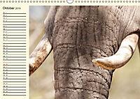 Elefanten - Graue Riesen (Wandkalender 2019 DIN A3 quer) - Produktdetailbild 10
