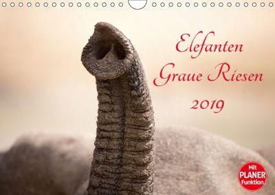 Elefanten - Graue Riesen (Wandkalender 2019 DIN A4 quer), Kirsten Karius