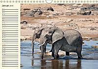 Elefanten - Graue Riesen (Wandkalender 2019 DIN A4 quer) - Produktdetailbild 1