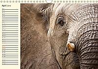 Elefanten - Graue Riesen (Wandkalender 2019 DIN A4 quer) - Produktdetailbild 4