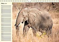 Elefanten - Graue Riesen (Wandkalender 2019 DIN A4 quer) - Produktdetailbild 3