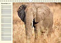 Elefanten - Graue Riesen (Wandkalender 2019 DIN A4 quer) - Produktdetailbild 11