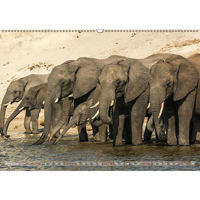 elefanten in afrika die mit den gro en ohren wandkalender 2018 din a2 quer kalender bestellen. Black Bedroom Furniture Sets. Home Design Ideas