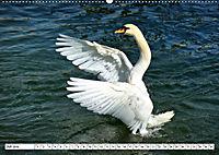 Elegante Schwäne (Wandkalender 2019 DIN A2 quer) - Produktdetailbild 7
