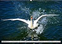 Elegante Schwäne (Wandkalender 2019 DIN A2 quer) - Produktdetailbild 9