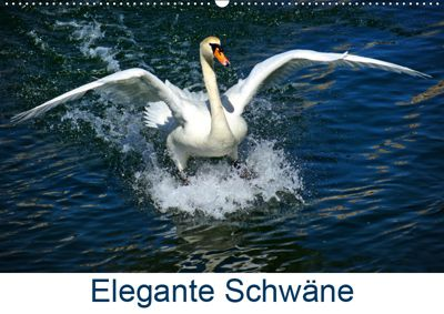 Elegante Schwäne (Wandkalender 2019 DIN A2 quer), kattobello