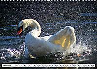 Elegante Schwäne (Wandkalender 2019 DIN A2 quer) - Produktdetailbild 1