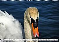 Elegante Schwäne (Wandkalender 2019 DIN A2 quer) - Produktdetailbild 4