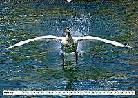 Elegante Schwäne (Wandkalender 2019 DIN A2 quer) - Produktdetailbild 3