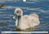 Elegante Schwäne (Wandkalender 2019 DIN A4 quer) - Produktdetailbild 8