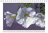 Eleganz in Weiss (Tischkalender 2019 DIN A5 quer) - Produktdetailbild 9