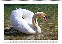 Eleganz in Weiß (Wandkalender 2019 DIN A2 quer) - Produktdetailbild 7