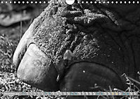 Elephants up close and personal (Wall Calendar 2019 DIN A4 Landscape) - Produktdetailbild 12
