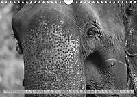 Elephants up close and personal (Wall Calendar 2019 DIN A4 Landscape) - Produktdetailbild 1