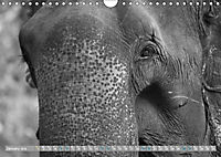 Elephants up close and personal (Wall Calendar 2019 DIN A4 Landscape) - Produktdetailbild 1
