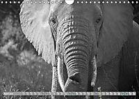 Elephants up close and personal (Wall Calendar 2019 DIN A4 Landscape) - Produktdetailbild 4