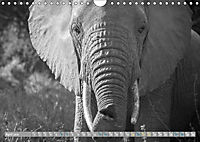 Elephants up close and personal (Wall Calendar 2019 DIN A4 Landscape) - Produktdetailbild 4