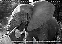 Elephants up close and personal (Wall Calendar 2019 DIN A4 Landscape) - Produktdetailbild 9