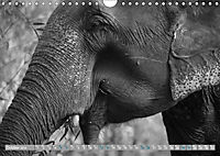 Elephants up close and personal (Wall Calendar 2019 DIN A4 Landscape) - Produktdetailbild 10