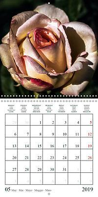 Eltville's roses (Wall Calendar 2019 300 × 300 mm Square) - Produktdetailbild 5