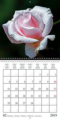 Eltville's roses (Wall Calendar 2019 300 × 300 mm Square) - Produktdetailbild 2
