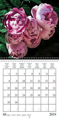 Eltville's roses (Wall Calendar 2019 300 × 300 mm Square) - Produktdetailbild 4