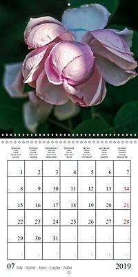 Eltville's roses (Wall Calendar 2019 300 × 300 mm Square) - Produktdetailbild 7