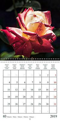 Eltville's roses (Wall Calendar 2019 300 × 300 mm Square) - Produktdetailbild 3