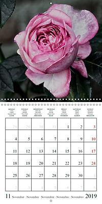 Eltville's roses (Wall Calendar 2019 300 × 300 mm Square) - Produktdetailbild 11