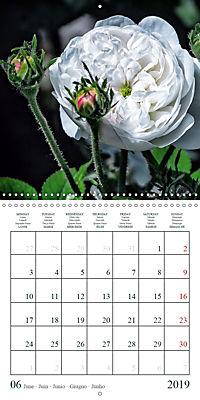 Eltville's roses (Wall Calendar 2019 300 × 300 mm Square) - Produktdetailbild 6