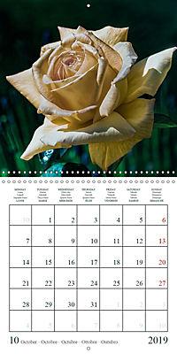 Eltville's roses (Wall Calendar 2019 300 × 300 mm Square) - Produktdetailbild 10