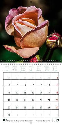 Eltville's roses (Wall Calendar 2019 300 × 300 mm Square) - Produktdetailbild 9