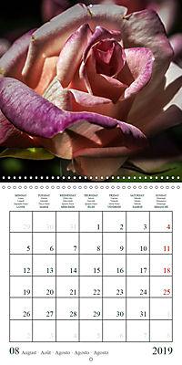 Eltville's roses (Wall Calendar 2019 300 × 300 mm Square) - Produktdetailbild 8