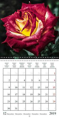 Eltville's roses (Wall Calendar 2019 300 × 300 mm Square) - Produktdetailbild 12