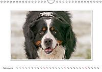 Emotional Moments: Bernese Mountain Dog. UK-Version (Wall Calendar 2019 DIN A4 Landscape) - Produktdetailbild 2