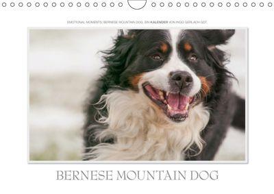 Emotional Moments: Bernese Mountain Dog. UK-Version (Wall Calendar 2019 DIN A4 Landscape), Ingo Gerlach GDT