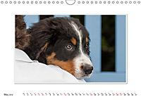Emotional Moments: Bernese Mountain Dog. UK-Version (Wall Calendar 2019 DIN A4 Landscape) - Produktdetailbild 5