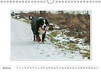 Emotional Moments: Bernese Mountain Dog. UK-Version (Wall Calendar 2019 DIN A4 Landscape) - Produktdetailbild 3