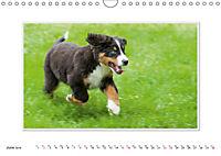 Emotional Moments: Bernese Mountain Dog. UK-Version (Wall Calendar 2019 DIN A4 Landscape) - Produktdetailbild 6