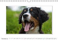 Emotional Moments: Bernese Mountain Dog. UK-Version (Wall Calendar 2019 DIN A4 Landscape) - Produktdetailbild 11