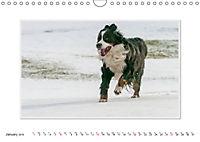 Emotional Moments: Bernese Mountain Dog. UK-Version (Wall Calendar 2019 DIN A4 Landscape) - Produktdetailbild 1