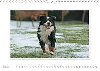 Emotional Moments: Bernese Mountain Dog. UK-Version (Wall Calendar 2019 DIN A4 Landscape) - Produktdetailbild 4