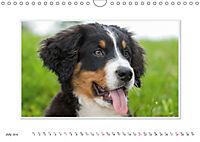 Emotional Moments: Bernese Mountain Dog. UK-Version (Wall Calendar 2019 DIN A4 Landscape) - Produktdetailbild 7