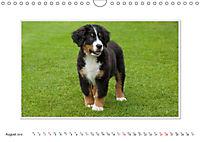 Emotional Moments: Bernese Mountain Dog. UK-Version (Wall Calendar 2019 DIN A4 Landscape) - Produktdetailbild 8