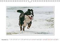 Emotional Moments: Bernese Mountain Dog. UK-Version (Wall Calendar 2019 DIN A4 Landscape) - Produktdetailbild 12
