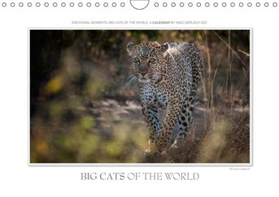 Emotional Moments: Big Cats of the World / UK-Version (Wall Calendar 2019 DIN A4 Landscape), Ingo Gerlach GDT