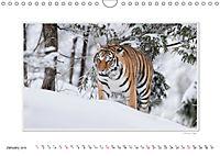 Emotional Moments: Big Cats of the World / UK-Version (Wall Calendar 2019 DIN A4 Landscape) - Produktdetailbild 1