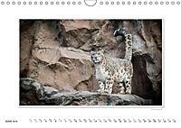 Emotional Moments: Big Cats of the World / UK-Version (Wall Calendar 2019 DIN A4 Landscape) - Produktdetailbild 6